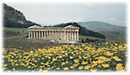 Poppies and daisies: Segesta in April.